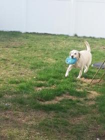 Frisbee timeee