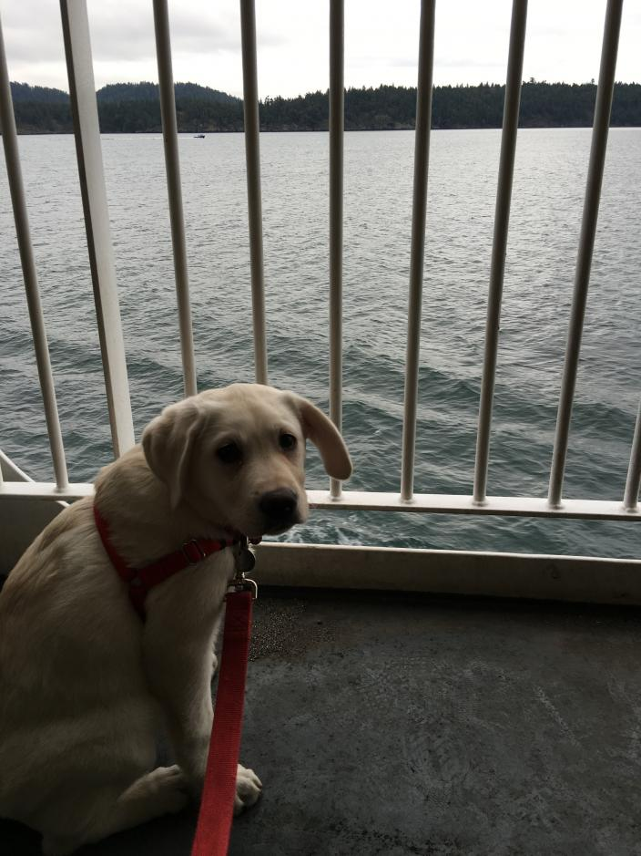 Bailey on the ferry going to Victoria, BC