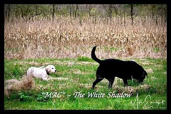 -dsc04895resized_fotor-white-shadow-jpg