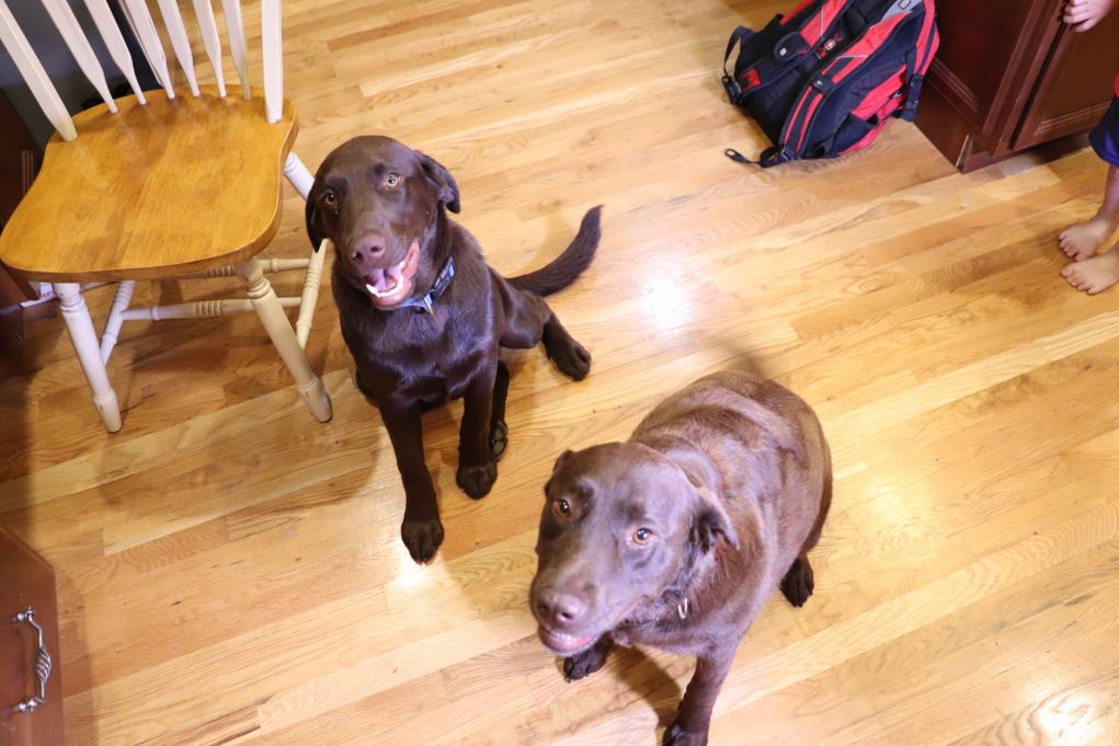 Latest of Coco (right) and our 7 mon old Hershey (left).